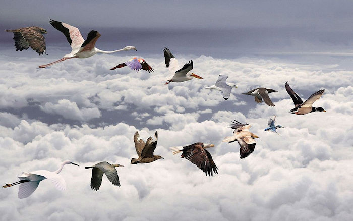 Flying-Bird-Wallpapers