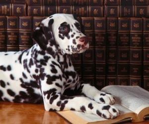 dalmatian_read_a_book