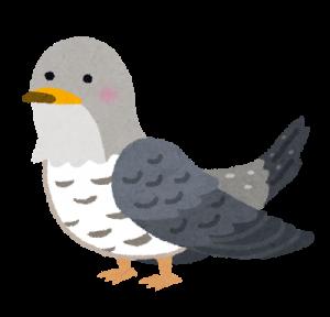 bird_kakkou