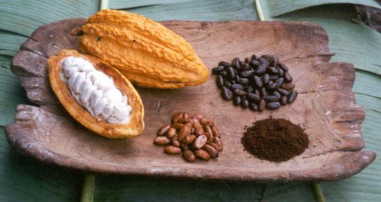 Cacao11