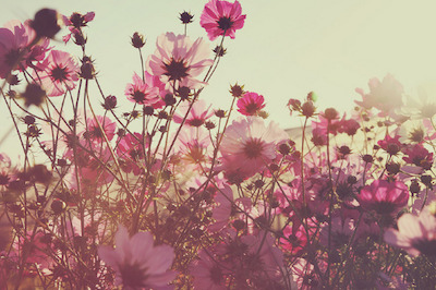 Fall Flowers 02 sml