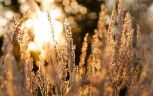 Grasses-corp-lights-bokeh-dark-facebook-cover-photos-473x295