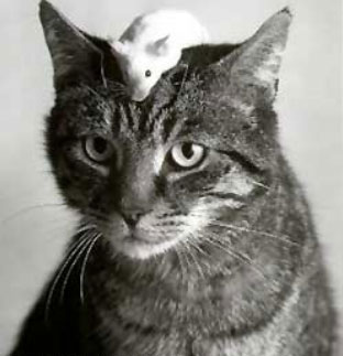 cat-&-mouse-11