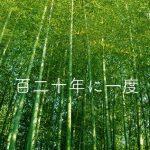 【竹にまつわる不思議】120年に一度しか咲かない竹の花逸話